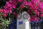 Thumbnail house entrance and a flowering bush, Thira, Santorini, Greece