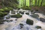 Thumbnail Mossy rocks in Monbach creek, Black Forest, Baden-Wuerttemberg, Germany, Europe