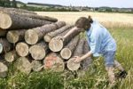 Thumbnail Farmer examining stacked logs
