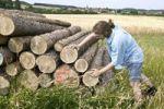 Thumbnail Farmer examining stacked logs