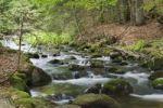 Thumbnail Kleine Ohe forest creek near Waldhaeuser in the Bavarian Forest National Park, Lower Bavaria, Bavaria, Germany, Europe