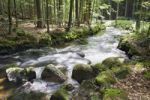 Thumbnail Kleine Ohe forest creek near Waldhaeuser in the Bavarian Forest National Park, Lower Bavaria, Bavaria, Germany, Europe