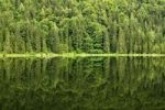 Thumbnail Spechtensee lake, reflections of a pine forest in the water, landscape between Tauplitz and Liezen, Salzkammergut, Styria, Austria, Europe