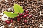 Thumbnail Red coffee berries (Coffea arabica) on a bed of coffee beans with coffee leaves