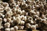 Thumbnail Garlic bulbs at a weekly market, Provence region, France, Europe