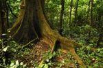 Thumbnail Cuc Phuong National Park, Vietnam, Southeast Asia