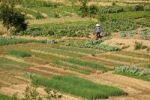 Thumbnail Women working in vegetable fields, Mai Chau Valley, Northern Vietnam, Vietnam, Asia