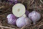 Thumbnail Elephant Garlic (Allium ampeloprasum), garlic variety