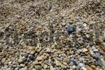 Thumbnail Pebbles on the beach at Slapton Sands South Devon England