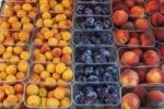 Thumbnail Apricot, plums and peaches in plastic cups, Wachau, Lower Austria, Austria, Europe