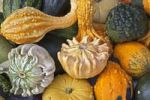 Thumbnail Gourds, several varieties