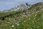 Thumbnail Flower meadow, Braunarlspitze, Lech, Zug, Vorarlberg, Austria, Europe