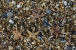 Thumbnail Starfish Brighton West Sussex England