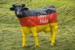 Thumbnail Cow in the German national colors, farmers' protest for fair milk prices, Ruegheim, Hassberge, Bavaria, Germany, Europe