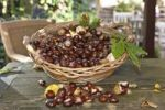 Thumbnail Horse Chestnuts or Conkers (Aesculus hippocastanum) with chestnut leaves, seeds and capsules in a wicker basket