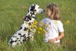 Thumbnail Little girl with Dalmatian in a meadow