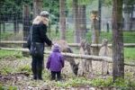 Thumbnail Mother and child in the game reserve, Grevenbroich, North Rhine-Westphalia, Germany, Europe