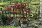 Thumbnail Borgonuovo near Chiavenna north of Lago Maggiore Lombardy Italy rose bush with steps at Acqua Fraggia