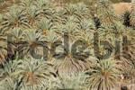 Thumbnail Vai palm beach, endemic palm Phoenix theophrasti, eastern Crete, Greece