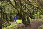 Thumbnail - Garajonay National Park laurisilva - La Gomera