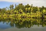 Thumbnail Canal des Pangalanes with various water plants, Tamatave, Madagascar, Africa