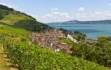 Thumbnail View over the vineyards on Twann village, Lake Bieler See, Canton Bern, Switzerland, Europe