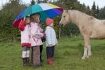 Thumbnail Girls with a large umbrella looking at a horse