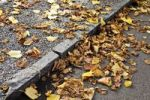 Thumbnail Autumn foliage on a street