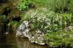 Thumbnail Idyllic garden