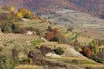 Thumbnail Cultivated landscape with vineyards in autumn, Woesendorf, Wachau valley, Waldviertel region, Lower Austria, Austria, Europe