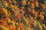 Thumbnail Autumnal mixed forest in the valley near Duernstein, Wachau valley, Waldviertel region, Lower Austria, Europe
