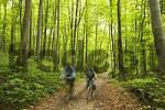 Thumbnail biker in forest near Baierbrunn - Germany