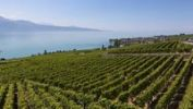Thumbnail View across the vineyards towards the village of Cully, Lake Geneva at back, Canton Vaud, Lake Geneva, Switzerland, Europe