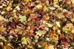 Thumbnail Colourful autumnal foliage