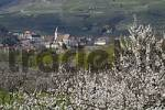 Thumbnail blooming apricot trees in the background village Spitz at the Danube Wachau Lower Austria