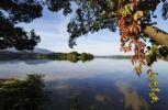Thumbnail Lake Staffel with the island of Woerth near Seehausen, Murnau, Upper Bavaria, Bavaria, Germany, Europe