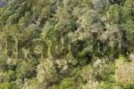 Thumbnail Garajonay National Park laurisilva - La Gomera