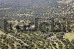 Thumbnail olive plantaions and church in Kastelli Plateau, Eastern Crete, Greece