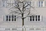 Thumbnail Snow-covered tree behind a white fence, Harlaching, Munich, Bavaria, Germany, Europe