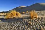 Thumbnail Sand dune of Erg Tihodaine, Wilaya Tamanrasset, Algeria, Sahara, North Africa