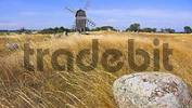 Thumbnail Stone and windmill, Island Oland, Sweden