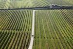 Thumbnail Autumnal vineyards near Unterloiben, Wachau, Waldviertel, Forest Quarter, Lower Austria, Austria, Europe