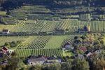 Thumbnail Vineyards around Ruehrsdorf, Rossatz-Arnsdorf district, Wachau, Mostviertel, Must Quarter, Lower Austria, Austria, Europe