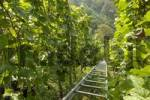 Thumbnail vine-yard with transportation system