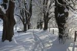 Thumbnail Alley in snow, winter scenery near Iffeldorf, Upper Bavaria, Germany, Europe