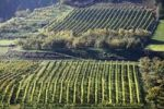 Thumbnail Cultural landscape with a vineyard and an orchard in Viessling, Spitzer Graben valley, Wachau valley, Waldviertel region, Lower Austria, Austria, Europe