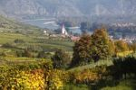 Thumbnail Vineyards, Weissenkirchen in the Wachau valley, Danube river, Waldviertel region, Lower Austria, Austria, Europe