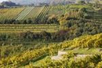 Thumbnail Vineyards, Weissenkirchen in the Wachau valley, Waldviertel region, Lower Austria, Austria, Europe