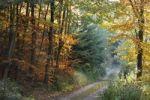 Thumbnail Forest in autumn, Buschandlwand mountain, Wachau valley, Waldviertel region, Lower Austria, Austria, Europe