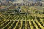 Thumbnail Vineyards near Rossatz, Danube river, Wachau valley, Mostviertel region, Lower Austria, Austria, Europe